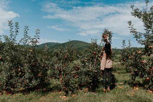 Woman picking apples